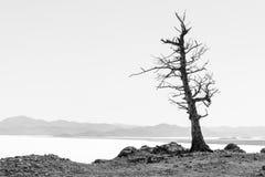 Einzelner Baum Grafische Kunst Stockfotos