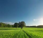 Einzelner Baum, Greenfield und Wald Lizenzfreie Stockfotografie