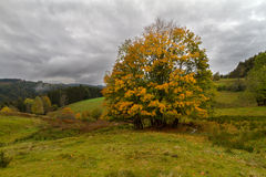 Einzelner Baum am Herbst im Schwarzwald, Deutschland Stockfotos
