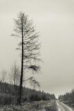 Einzelner Baum hinunter einen Weg im Nebel Lizenzfreies Stockfoto