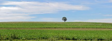 Einzelner Baum am Horizont lizenzfreies stockbild