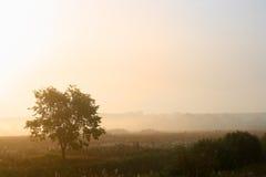Einzelner Baum im Nebel Stockbilder