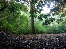 Einzelner Baum im Sonnenlicht stockbild