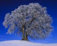 Einzelner Baum im Winter Stockbild