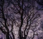 Einzelner Baum mit einem Blick auf seinen Niederlassungen gegen das Licht Lizenzfreies Stockfoto