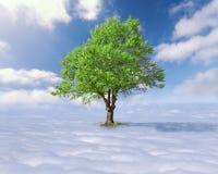 Einzelner Baum mit Grün verlässt über den Wolken Stockbilder