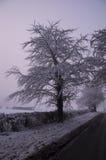 Einzelner Baum mit nebelhaftem Hintergrund Stockbild