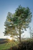 Einzelner Baum mit Sonnenstrahlen während eines Sonnenuntergangs Stockfotografie