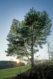 Einzelner Baum mit Sonnenstrahlen während eines Sonnenuntergangs Stockfotos