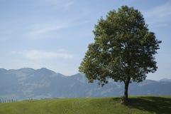 Einzelner Baum nahe durch Oberstdorf Lizenzfreies Stockfoto