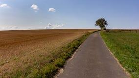 Einzelner Baum nahe einem allgemeinen Weg durch Ackerland in Luxemburg lizenzfreies stockfoto