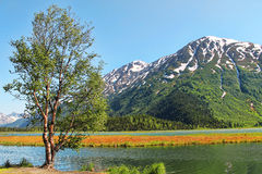Einzelner Baum nahe einem See Lizenzfreie Stockfotografie