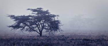 Einzelner Baum am nebeligen nebelhaften Wald von Afrika Lizenzfreies Stockfoto