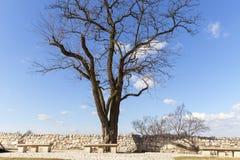 Einzelner Baum ohne Blätter, leere Steinbänke auf einem Hintergrund des blauen Himmels Lizenzfreies Stockfoto