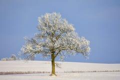 Einzelner Baum Platz nahe Siauliai Stockfoto