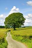 Einzelner Baum und Weg. Stockfotos