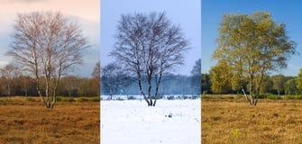 Einzelner Baum in verschiedene Jahreszeiten Lizenzfreie Stockfotos