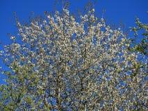 Einzelner Baum von der Unterseite Lizenzfreie Stockbilder
