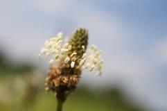 Einzelner Blumenabschluß oben lizenzfreie stockbilder