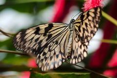Einzelner brauner Schmetterling Stockfotos