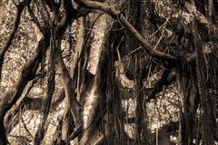 Einzelner Dschungel des Details Farbmit dem Sonnen des Blitzes lizenzfreies stockbild