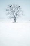 Einzelner einsamer Baum mit Vögeln auf dem schneebedeckten Gebiet Lizenzfreie Stockfotos