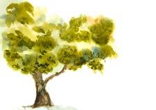 Einzelner grüner Baum Stockfoto