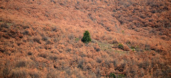 einzelner grüner Baum in einem braunen Wald Lizenzfreies Stockbild