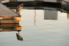 Einzelner Graureiher steht am Ende des Docks Lizenzfreie Stockfotografie