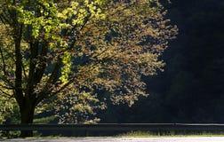 Einzelner großer Baum Lizenzfreies Stockbild