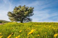 Einzelner großer Baum in einer blühenden Wiese Stockfoto