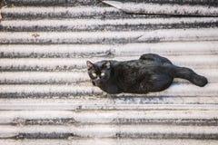 Einzelner Schlaf der schwarzen Katze auf Dachplatte Lizenzfreie Stockfotografie