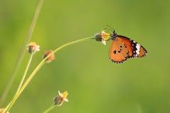 Einzelner Schmetterling auf Blume stockfotografie