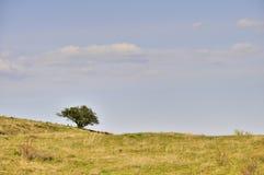 Einzelner Strauch auf Wiese unter blauem Himmel mit Wolken Stockfotos