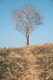 Einzelner toter Baum lizenzfreie stockfotografie