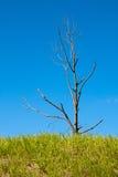 Einzelner toter Baum auf blauem Himmel Lizenzfreie Stockfotos