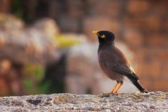 Einzelner Vogel, der auf der Wand sitzt Stockbild