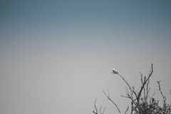 Einzelner Vogel, der auf Niederlassung sitzt Stockbild