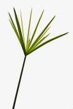 Einzelner Zweig des Abschlusses des grünen Grases oben Stockfotos