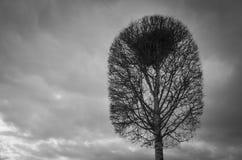 Einzelnes Baum- und Vogelnest an der Spitze der Niederlassungen Stockbild