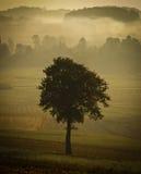 Einzelnes Baumschattenbild im Morgennebel Stockbilder