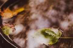 Einzelnes Blatt auf Wasserabschluß oben Herbst Hölzerner Hintergrund stockbilder