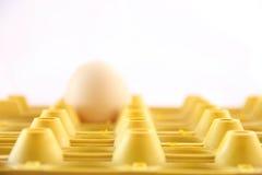 Einzelnes Ei auf gelbem Kasten Stockbild