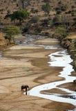Einzelnes Elefanttrinken Lizenzfreie Stockbilder