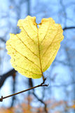 Einzelnes gelbes Blatt Stockfoto