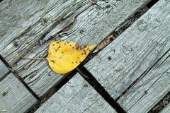Einzelnes gelbes Blatt auf einem verwitterten Steg Stockfotos
