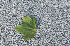 Einzelnes grünes Blatt des Sommers auf Pflasterung Lizenzfreies Stockfoto