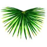 Einzelnes grünes Palmblatt lokalisiert stockfotografie