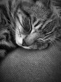 Einzelnes Kätzchen der getigerten Katze, das ruhig auf einer Couch schläft lizenzfreies stockbild