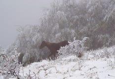 Einzelnes Pferd, das in den Wald läuft Stockfotos